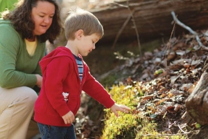 From Concept to Nature Preschool, ANCA Networks Count